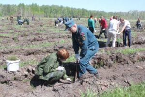 Обогащение лесного фонда Новосибирской области