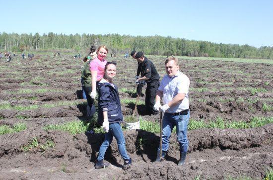 Лесовосстановление Новосибирской области