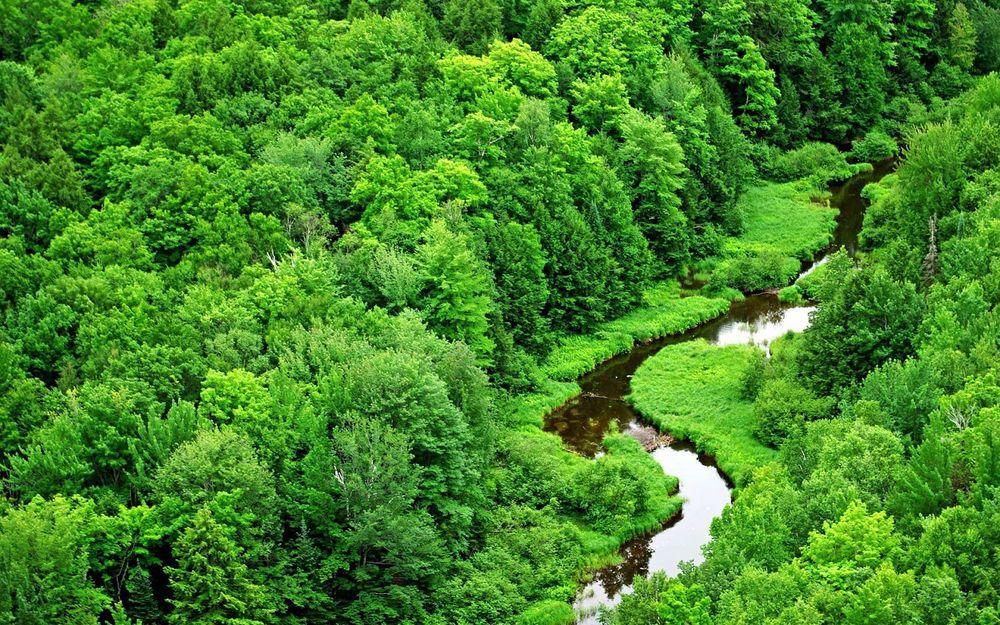 Положения закона о «лесной амнистии» преследуют целью защиту прав граждан на объекты недвижимости
