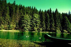 Закон о «лесной амнистии»
