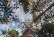 Greenpeace требует от Essity отказаться от закупок древесины у Архангельского ЦБК