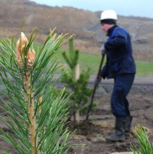 Калтанский угольный разрез - лесовосстановление