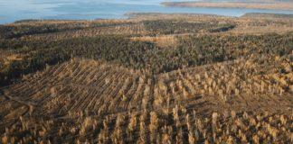 ИКЕА уличена в скупке нелегальной древесины из Иркутской области