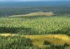 Константин Лашкевич предложил разрешить приватизацию леса в России